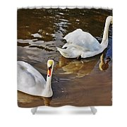Two Swans On Spring Water Shower Curtain