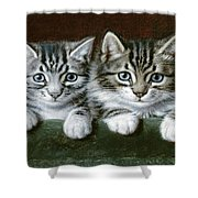 Two Tabby Kittens  Shower Curtain