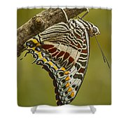 Two Tailed Pasha Butterfly Shower Curtain