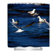 Two Terns A Fly Shower Curtain