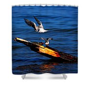 Two Terns A Tango Shower Curtain