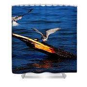 Two Terns Today Shower Curtain by Amanda Struz