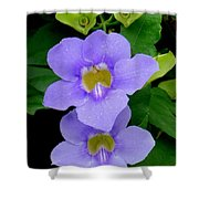 Two Thunbergia With Dew Drops Shower Curtain