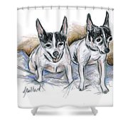 Two Toy Fox Terriers Shower Curtain