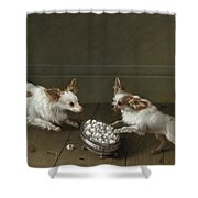Two Toy Spaniels At A Sugar Bowl Shower Curtain