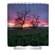 Two Trees In A Purple Sunset Shower Curtain