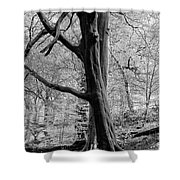 Two Trees In Spring - Mono Shower Curtain
