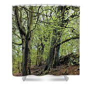 Two Trees In Springtime Shower Curtain
