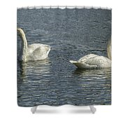 Two Trumpeter Swans At Oxbow Bend Shower Curtain