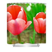 Two Tulips In Bloom  Shower Curtain