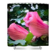Two Unopen Pink Hibiscus Flowers Shower Curtain
