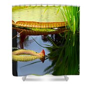 Two Victoria Water Lilypads Shower Curtain