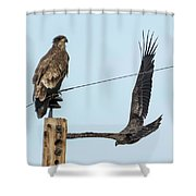 Two Views Of A Juvenile Bald Eagle Shower Curtain