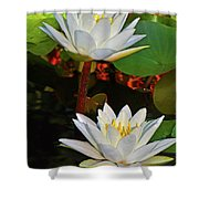 Two Water Lilies 004 Shower Curtain