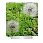 Two Wishes Shower Curtain