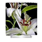 Two Wonderful Lilies  Shower Curtain