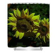 Two Yellow Beauties  Shower Curtain