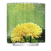 Two Yellow Gerber Daisies Shower Curtain