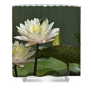Two Yellow Water Lilies Shower Curtain