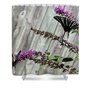 Two Zebra Swallowtail Butterflies Shower Curtain