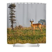Ugandan Kob Shower Curtain