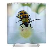 Beauty And The Bug Shower Curtain
