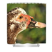 Ugly Duck Shower Curtain
