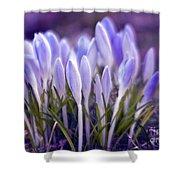 Ultra Violet Sound Shower Curtain