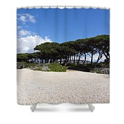 Umbrella Pine, Lerins Island Shower Curtain