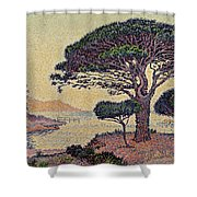 Umbrella Pines At Caroubiers Shower Curtain by Paul Signac