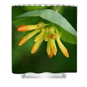 Umbrella Plant Shower Curtain