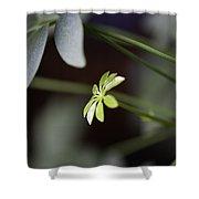 Umbrella Plant Shower Curtain