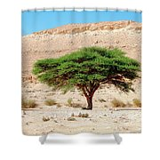 Umbrella Thorn Acacia, Negev Israel Shower Curtain
