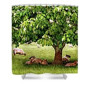 Umbrella Tree Shower Curtain