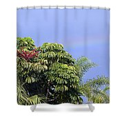 Umbrella Tree With Rainbow And Flower Shower Curtain