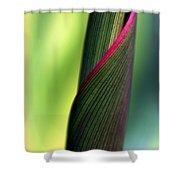 Uncommon Shower Curtain