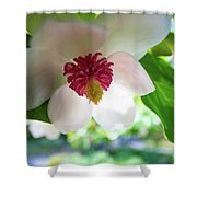 Under Flower Shower Curtain