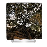 Under Spanish Moss Shower Curtain by David Lee Thompson