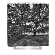 Under The Century Tree - Black And White Shower Curtain