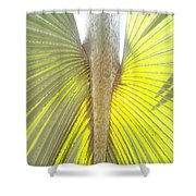 Under The Palm II Gp Shower Curtain