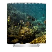 Under The Sea Scape Shower Curtain