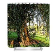 Under The Weeping Willow Shower Curtain