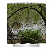 Under The Wild Wood Arch Shower Curtain