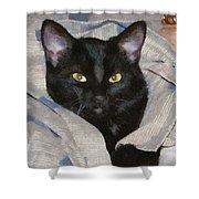 Undercover Kitten Shower Curtain