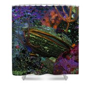Undersea Clam Shower Curtain