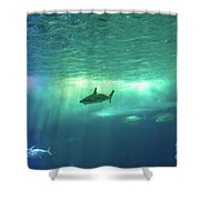 Undersea Scene Background Shower Curtain