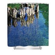 Underwater Cypress Stump Shower Curtain