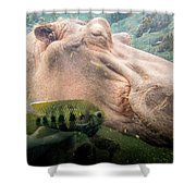 Underwater Hippo Shower Curtain