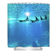 Underwater Manta Background Shower Curtain