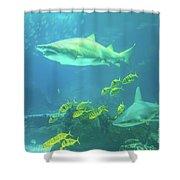 Underwater Shark Background Shower Curtain
